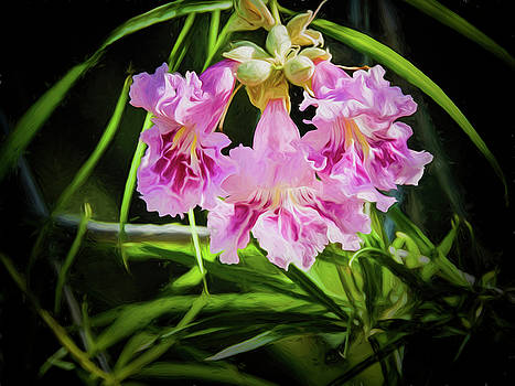 Desert Willow by Penny Lisowski