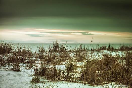 Desolate  by Debra Forand