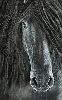 Detail In Black by Terry Kirkland Cook