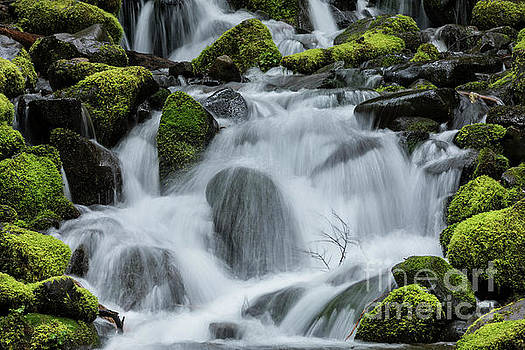 Detail of Moss Covered Rocks and Flowing Stream by Brandon Alms