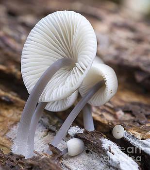 Compuinfoto  - detail of mushroom