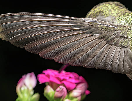 Details of the hummingbird wing by William Lee