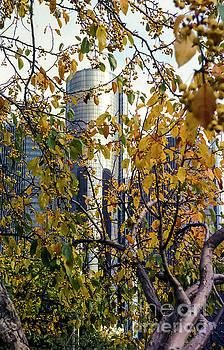 Bob Phillips - Detroit Marriott amont the China Berrys