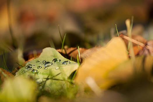Dew and Gingko  by Bulik Elena