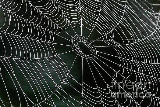 Dew Covered Spider Web by Kimberly Blom-Roemer