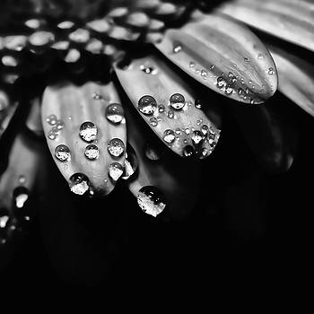 Dew Drops by David Patterson