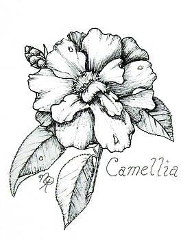 Dew Kissed Camellia by Nicole Angell