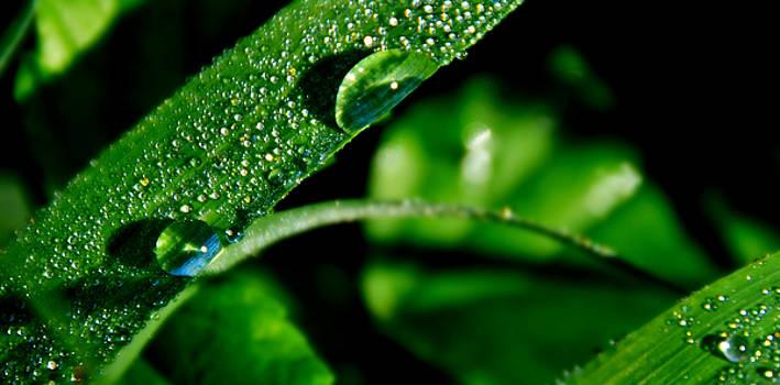 Dew on Grass 3 by Bibi Rojas