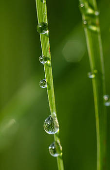Dew by Tran Minh Quan