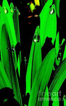 Dewdrops by Joyce Woodhouse