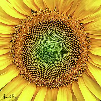 Dewdrops on the Sun by Andrea Platt
