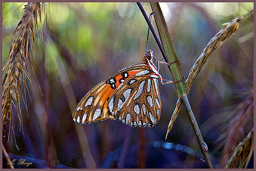 Dewy Butterfly by Marlena  Burger