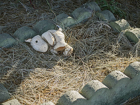 Allen Sheffield - Dia de los Muertos - Infant