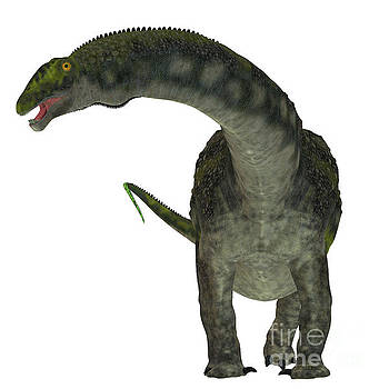 Corey Ford - Diamantinasaurus Dinosaur on White