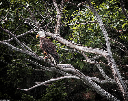 Diamond Highway Eagle by Richard Bean