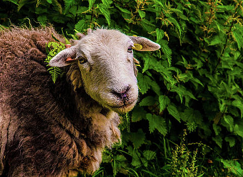 Did you say mint sauce by Peter Jenkins