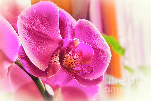 Diffused Orchid by Joe Geraci