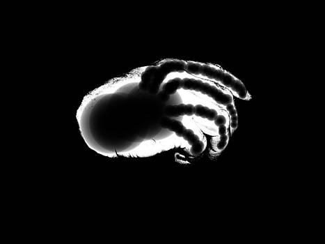 Tony Murray - Digital Free Hand