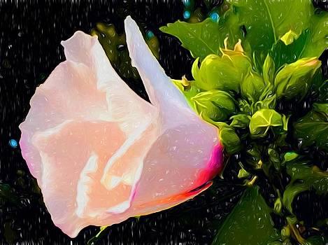 Digital Painted Hibiscus by Debra Lynch