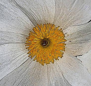 Digital Poppy by Marna Edwards Flavell