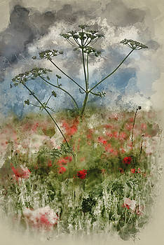 Digital watercolour painting of Beautiful poppy field landscape  by Matthew Gibson