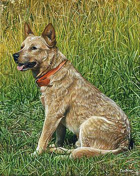 Dingo by Cara Bevan
