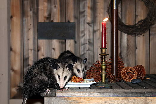 Dining Possums I by Ron Romanosky