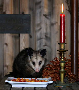 Dining Possums II by Ron Romanosky