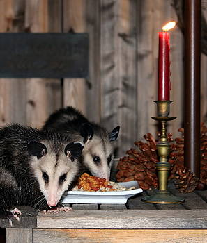 Dining Possums III by Ron Romanosky