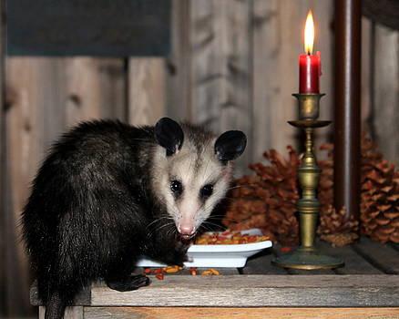Dining Possums V by Ron Romanosky