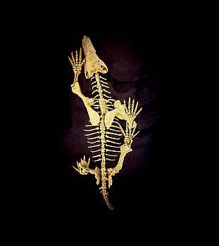 Dino Bones II by Ray Warren