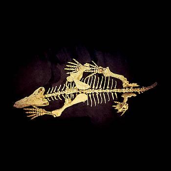 Dino Bones by Ray Warren