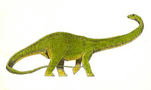 Diplodocus by Michael Vigliotti