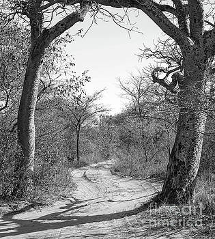 Dirt Road Botswana Black And White by Tim Hester
