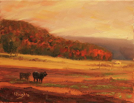 Discovering Cows by Steve Haigh