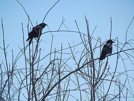 Betty Pieper - Disheveled Crow and Prim Crow on Thin Branches