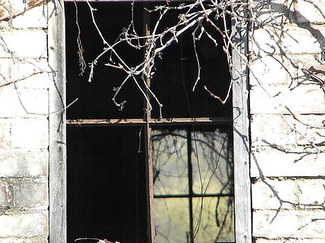 Distant Window by Melissa Mendelson