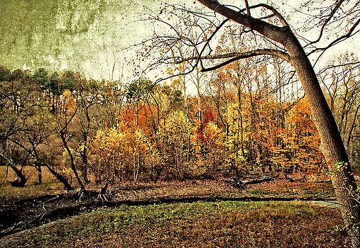 Distressed Fall Scene Maryland by Donna Haggerty