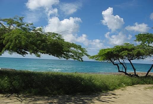 Divi Divi Tree at Eagle Beach by Cheri Carman