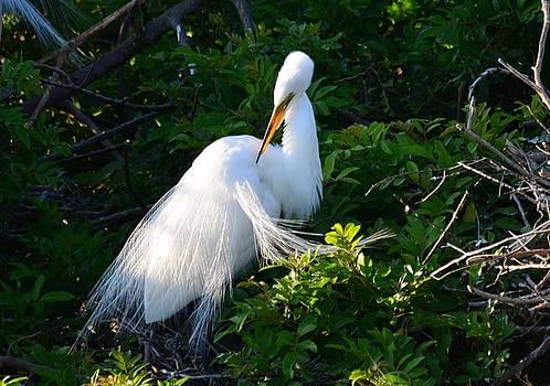 Patricia Twardzik - Divine White Bird Grooming