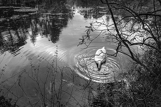 Swan Dive by Glenn DiPaola