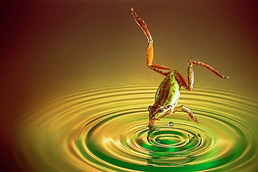Diving by William Freebilly photography