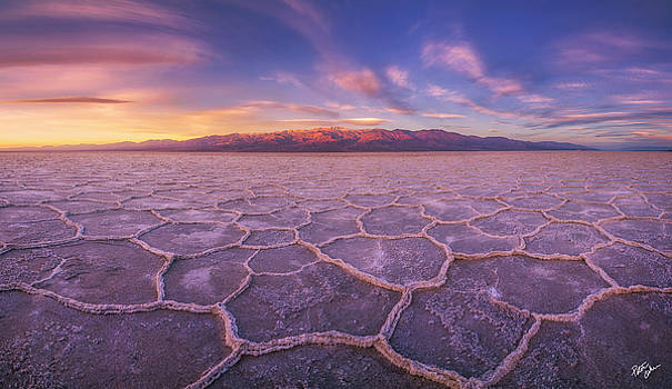 Division by Peter Coskun