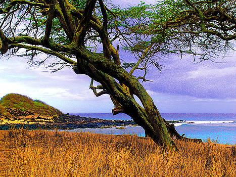 James Temple - Dixie Maru Cove