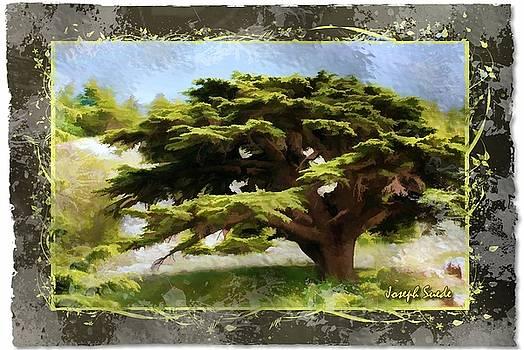 DO-00318 Cedar Barouk - Framed by Digital Oil