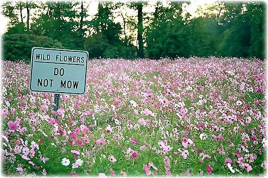Do Not Mow by Matthew Jack