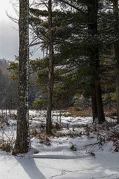 Doc Lee Rd Pine Tree by Frank Morales Jr