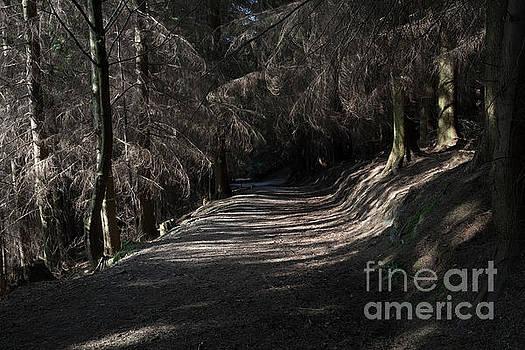 Dodd Wood track by Gavin Dronfield