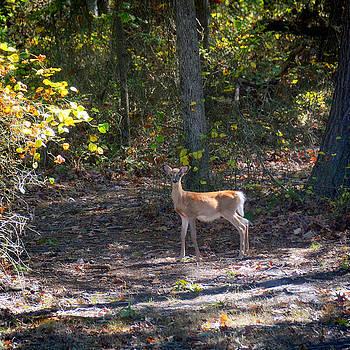 Doe a Deer by Marites Reales