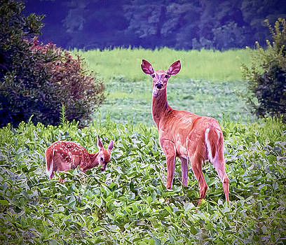 Doe And Fawn by Brian Wallace